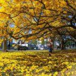 Datas comemorativas de setembro: dias especiais e início da Primavera