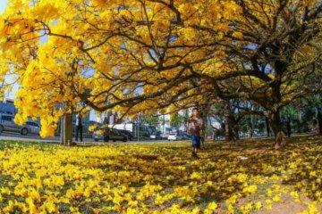 Início da Primavera e datas comemorativas de setembro
